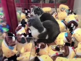 去商场抓娃娃,没想到可以抓活的小猫咪