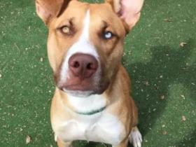 """狗狗被领养48小时后遭退回,原因竟是""""它太乖了…"""""""
