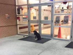 小学教师在校门外发现一只流浪狗,爱心之举帮狗狗找到新家
