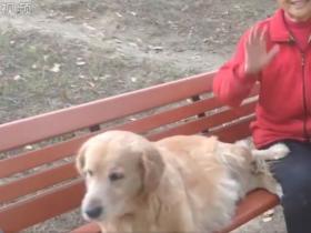 安徽阜阳一导盲犬,在主人去世后,仍在公园长椅帮主人占座