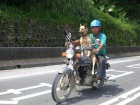 坐在摩托车后座的狗狗:主人,你再回头,就吓死狗狗了!