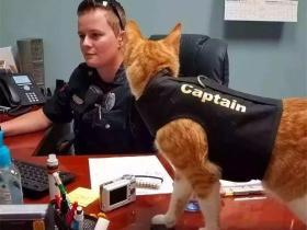 教猫咪学狗狗握手,学会六点训猫技巧,带猫掌握各种技能!