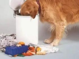 狗狗因为爱翻垃圾桶,就被自己的主人丢到了救助站