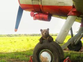 俄罗斯飞行员与一只熊宝宝的故事,非常感人!