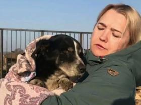 18岁爱犬过世,主人就埋葬了它,没想到它竟复活爬出了墓穴
