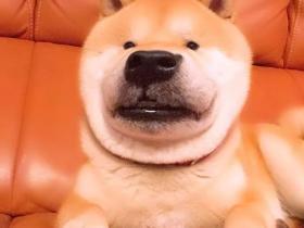 用美颜特效拍狗...柴柴:丑逼又嫉妒本汪的美貌了!