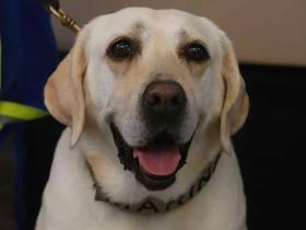 救过50多人的搜救犬退休,它的装备变成玩具,值得幸福的余生