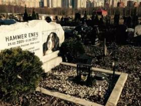 国外的宠物殡葬业现状如何?