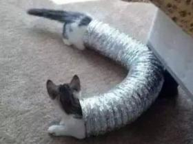 """日推上有个""""猫伸长协会"""",里面的猫都太太太太太太太太长了!"""