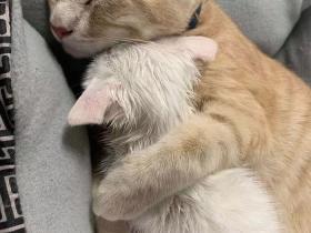 歪果网友分享了一组非常有爱的猫猫照片