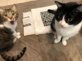 时隔四年,日本推主家的猫终于学会用猫被窝了