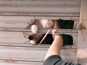 """""""疫情爆发后,我每天在喂邻居家的猫…"""""""