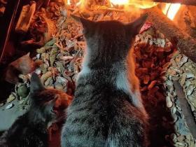 猫生艰难,总有刁民想害朕!