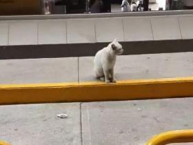 流浪猫在超市门前骗吃骗喝,最后…竟然骗到了一个家!