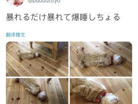 日本推主@puuuutttyo家的橘猫火了,倒头就睡的亚子