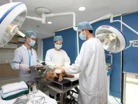兽医远程诊疗成热门,全球疫情助推迎来黄金期