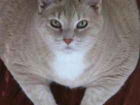 """那只长了""""点赞手""""的肥猫,终于减肥成功啦!"""