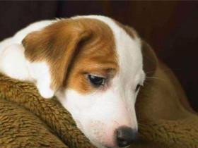 狗狗呕吐是怎么回事?这种情况一定要重视起来了