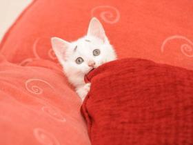 为什么要养猫?细数养猫的25个原因