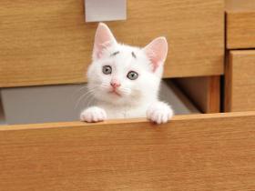 猫咪臭屁股怎么解决啊?