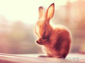 """宠物兔丢失三四个小时,邻居已经将其剥皮洗净,准备做成""""午饭"""""""