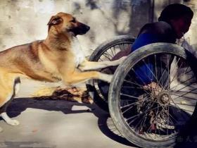 生活中,为什么有很多人特别讨厌养狗的人?