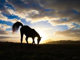 英国一小马驹被弃荒野差点死掉 被救后逆袭成冠军马