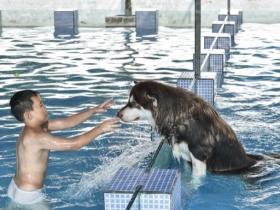 小狗夏天喜欢游泳吗?游泳会对小狗健康有益处吗?