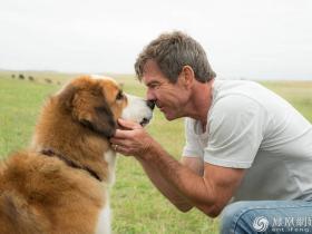 不文明养狗的人应该被谴责,毒狗的人什么时候成英雄了?