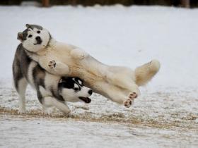 狗狗为什么喜欢打架?狗狗打架的原因是什么?