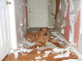 狗狗乱咬东西怎么办?狗狗乱咬东西的原因