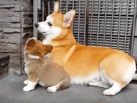 狗狗爱主人的八种表现,你家的汪星人有吗?