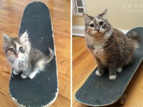 """猫咪为什么要打呼噜?猫咪为什么发出""""呼噜""""的声音"""
