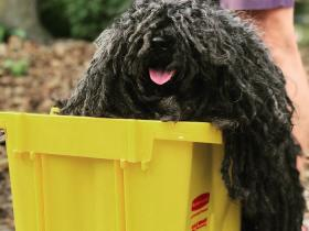 非常有创意的Cosplay:把狗装扮成一个拖把,带着它游街