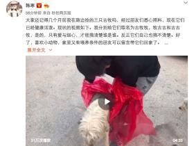 """韩寒救助了三条被犬舍抛弃的古牧,呼吁""""领养代替购买"""""""