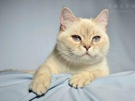 用生骨肉喂养猫咪,有哪些优缺点?