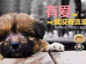 有一只狗狗现在不想养了,应该怎么办?