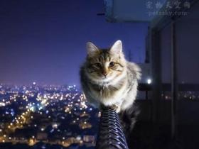 6个月的猫不会跳还恐高,该怎么锻炼它?