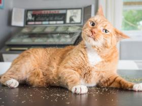 """猫咪对这种植物毫无抵抗能力,猫奴可以在家里备一些""""猫薄荷"""""""