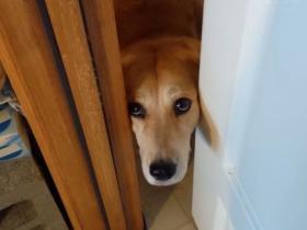 铲屎官出门的时候,据说99%的人受不了狗狗这样的表情
