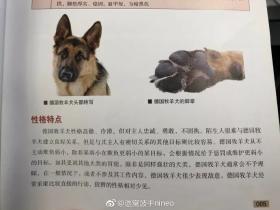 德国牧羊犬,一种能够让女性得到安全感的狗狗!