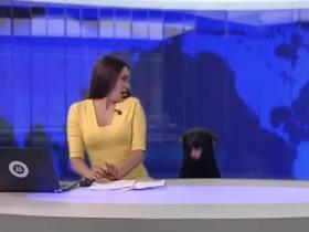 俄罗斯主持人直播时,突然闯进一只狗砸,提高了收视率