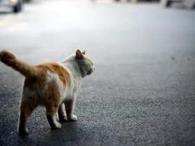 被抛弃过的猫被捡回,为什么会特别乖?