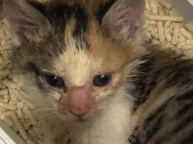 网友晒出收养的流浪猫,前后对比的照片惊呆无数人!
