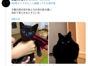 养了一只蓝眼睛的黑猫,吸着吸着…意外发生