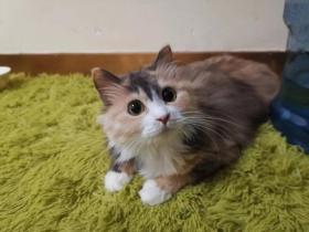 可爱又好看的中华田园猫(20+)