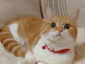 """""""妈!你看这只猫用尾巴勾引我!!!"""""""
