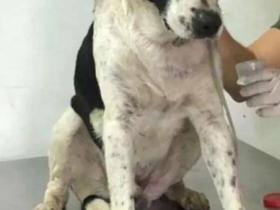 流浪狗主动走进诊所:巴西一兽医诊所里,迎来不速之客