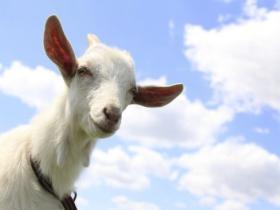 羊年,小羊送你21句激励人心的话