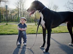 狗狗到底可以长多大 你永远想象不到(一)